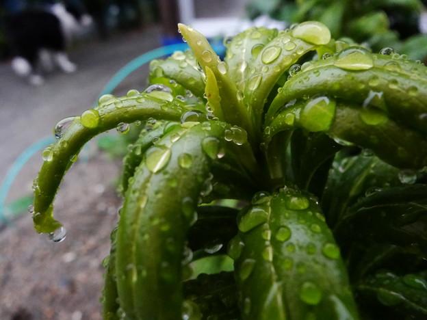 雨の日の楽しみ♪