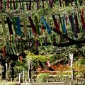 Photos: 大仏山の彼岸花526c