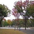 Photos: ケヤキの紅葉885c