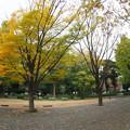 Photos: 科学博物館前の銀杏646