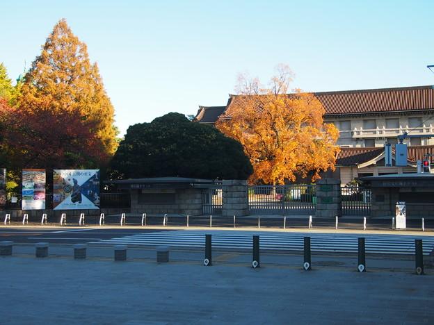 Photos: 国立博物館のユリの木712