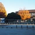 国立博物館のユリの木712