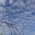 「秋の雲」