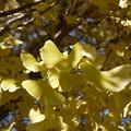 黄色まぶしく