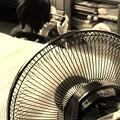 Photos: 第71回モノコン『その熱冷ませ!』
