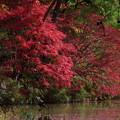 森林の紅葉を散策9