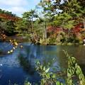 森林の紅葉を散策12