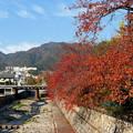 桜の綺麗な紅葉2