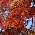 瑞宝寺公園の紅葉1-5