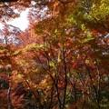 瑞宝寺公園の紅葉2-5