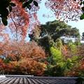 瑞宝寺公園の紅葉3-1