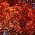 瑞宝寺公園の紅葉3-5