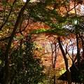 瑞宝寺公園の紅葉4-2