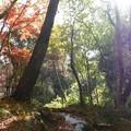 瑞宝寺公園の紅葉4-4