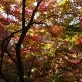 瑞宝寺公園の紅葉4-5