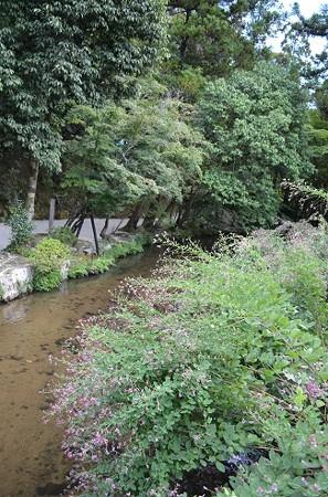 秋の上賀茂神社 2