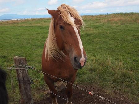 野付半島にいたお馬さん