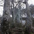 橅林の急登・米山18-3