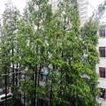 写真: 上海 台風で暴風雨 揺れる中庭の木