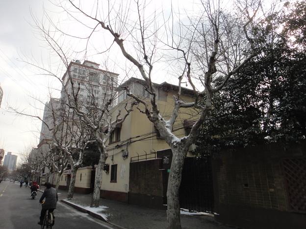 前日の雪と木
