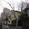 Photos: 前日の雪と木