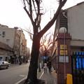 Photos: 木々の間の夕日
