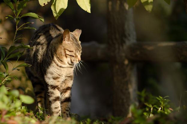 背伸びする猫ちゃん