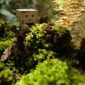 写真: 大自然の中を探索中