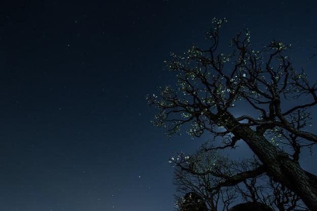 Photos: 星夜の梅