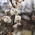 Photos: 香篆(こうでん)