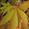 Photos: 調音の滝公園の紅葉