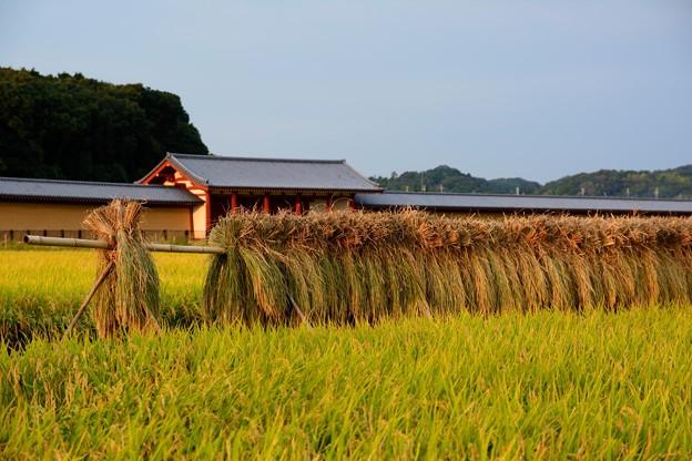奈良時代の収穫