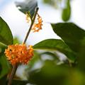 Photos: 秋の植物3