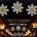 Photos: 今年のクリスマスイルミ