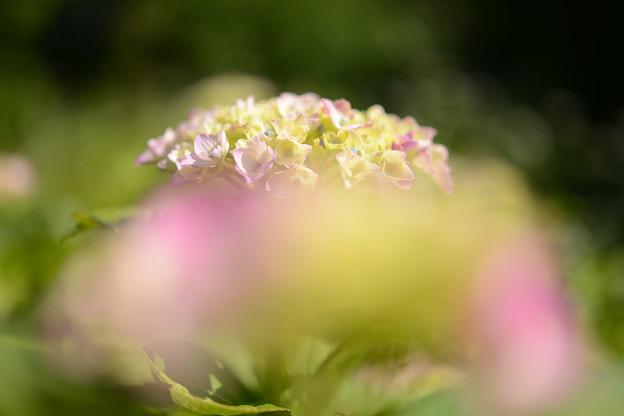 Photos: 梅雨の味彩