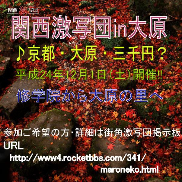 秋の撮影会 告知