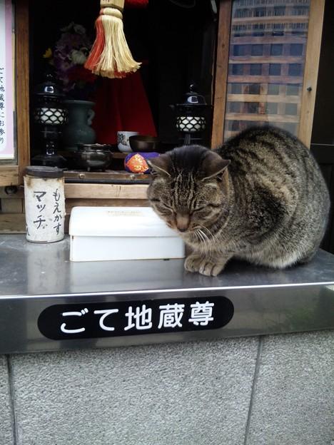恐怖!梅田には本当にごてぬこがいた!!
