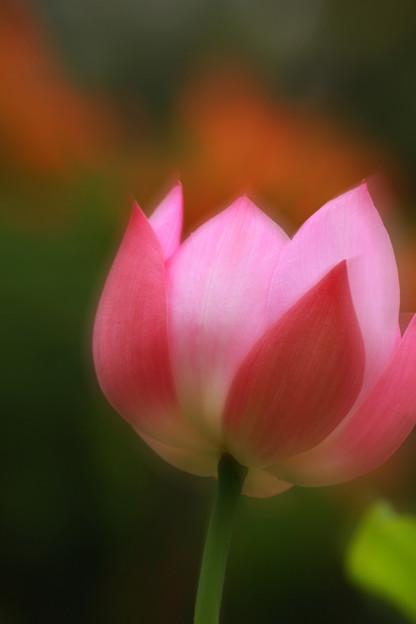 Photos: The dream of a Lotus