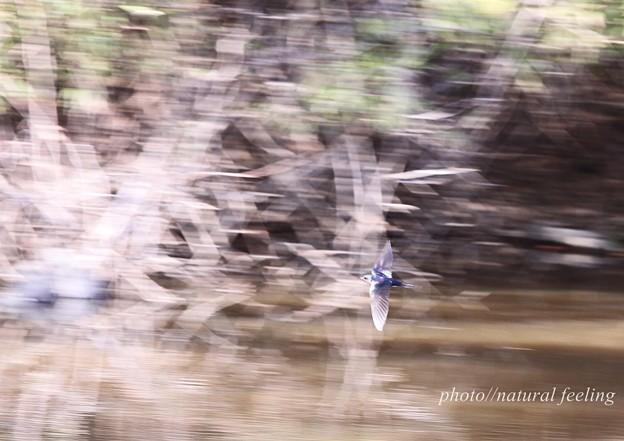 ツバメが来た日4一瞬を撮る4