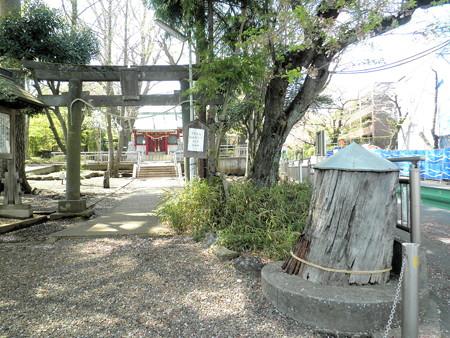 粕谷八幡神社-01a_鳥居・わかれの杉の切株・二代目わかれの杉