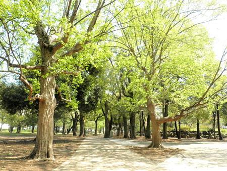 蘆花公園-01
