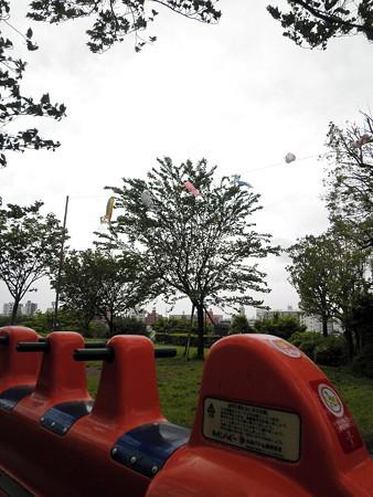 西郷山公園-05強風の中の鯉のぼりc