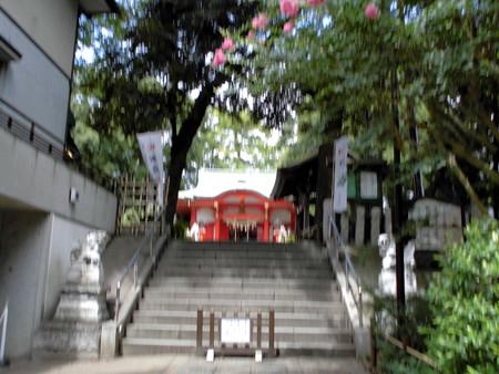 熊野神社-03拝殿a百日紅(さるすべり)