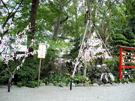 浅間神社-09さくらみくじ