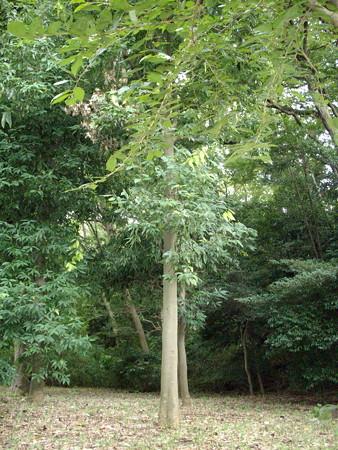 多摩川台公園-08多摩川台公園古墳群_亀甲山古墳b