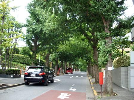 田園調布駅界隈-03銀杏並木(宝来公園へ)