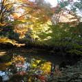 写真: 六義園-紅葉11山陰橋近く
