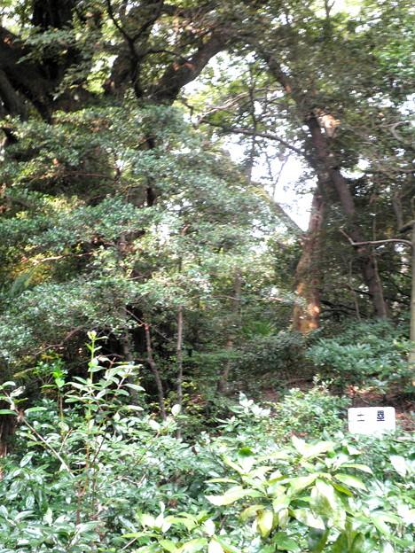 国立自然教育園(晩秋)-07