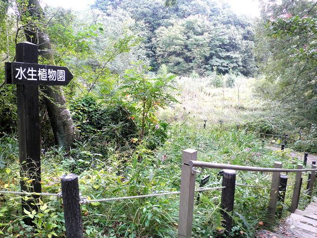 国立自然教育園(晩秋)-05