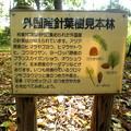 晩秋-05外国産針葉樹見本林a